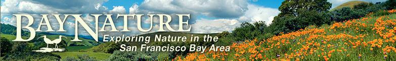 bay-nature-logo